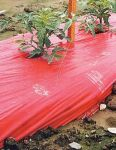 Item No 125   Red Plastic Mulch, 4 ft x 2,400 ft, 1.25 Mil. Film