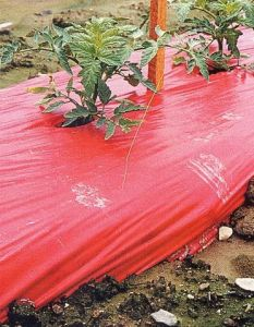 Item No 126   Red Plastic Mulch, 4 ft X 600 ft, Smooth finish, Tomato and Strawberry Mulch