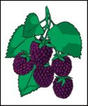 Item No. P21BKB Blackberries Road Sign