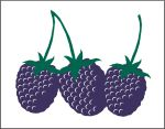 Item No P26BKB Blackberries Marketeer